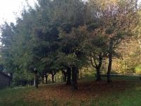 autunno vallombrosa ferrano mastio