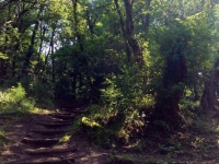 sentieri bosco vallombrosa ferrano mastio