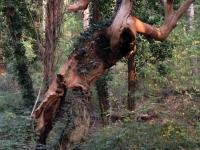 uomo albero fantasy vallombrosa