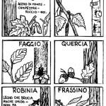 impariamo a conosce gli alberi in campeggio a Vallombrosa