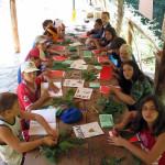 i ragazzi imparano a conoscere gli alberi del bosco al campo estivo